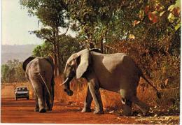 """Afrique - Togo -  Dapaong -  Eléphants à La """" Fosse Aux Lions """" (parc National) - Togo"""