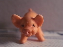 1 Figurine - Pig - Varkens