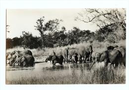 1936 Rhodesia/Zimbabwe Elephants Bathing Wankie Game Reserve RP Unused Empire Exh - Zimbabwe