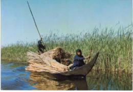 Asie - Iraq - Al Hammar Lagoon South Of Iraq - Iraq