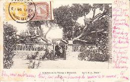 EGITTO - Leggi Testo, Animata, Viagg. 1906 - GIU-19-53 - Non Classificati
