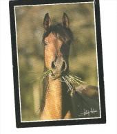CPM   CHEVAL    VANESSA  AL  MAURY  NON ECRITE     BE - Horses