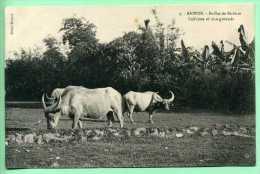 SAIGON - Buffles De Rizières - Vietnam