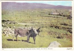 On The Mulrany-Achill Road, Co. Mayo  - Ireland / Eire (Animal: DONKEY) - Mayo