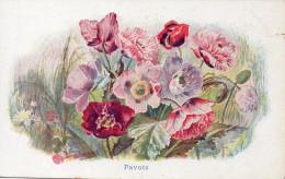 -59- HAUBOURDIN -Illustrée CHICOREE BERGERE -  Signée CHARLES-ALPHONSE MOREL - PAVOTS - Haubourdin