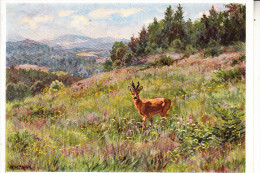 JAGD - HUNTING - JACHT - CHASSE - CACCIA - CAZA - LOWIECTWO - Reh - Künstler-Karte Alfred Mailick - Altri