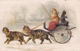 CPA . CHAT , Chats Humanisés. Joli Attelage . Calèche Tractée Par Deux Beaux Chats . Coché . Fouet - Dressed Animals
