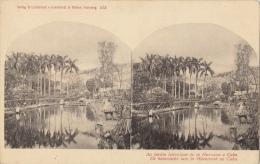 Carte Stereo Cuba Jardin Botanique De La Havane - Cartes Stéréoscopiques