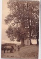 HERON - Capelle De Saint Donat - Héron