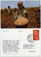 Fernando Poo - R�colte de cacahu�tes - MAGGI Fridolin - used 1961 - nice stamp