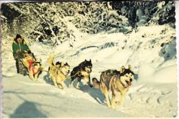 HUNDE - Schlittenhunde / Polarhunde / Dog Sled - Alaska - Hunde