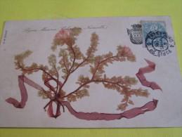 Algues Séchées/Coloration Naturelle/Cherbourg/Caen/1906     A71 - Fleurs, Plantes & Arbres