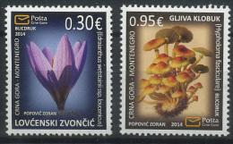 Montenegro 2014 Plants, Flora, Flowers, Mushrooms