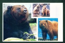 ARMENIA  -  Caucasian Brown Bear  Unused Postcard As Scans - Armenia