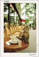 Chat Chaton Cat Bar Cafe Shinjiro Sagara 1986 Paris France ( 2 Scans) - Chats