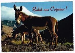 K177 Salut Aux Copains - Ane Donkey Mule Mulet Asino Burro / Non Viaggiata - Ezels