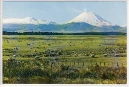 NEW ZEALAND -    TONGARIRO NATIONAL PARK AND MT. NGAURUHOE Vulcano - Grazing Sheep - Nouvelle-Zélande