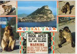 GIBRALTAR - From The Straits And ROCK APES - Gibraltar