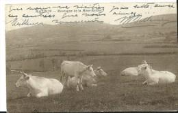 Matour Montagne De La Mere Boitier   Vaches - France