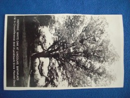 RPPC Historic White Oak At Lincoln's Birthplace (Hodgenville, Kentucky) - Présidents