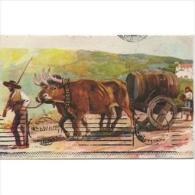 PTGLTP1230CPA-LFTMD1505TTSC . TARJETA POSTAL DE PORTUGAL.Carro De Bueyes En El Campo,cargados Con Tina De Vino. - Postales