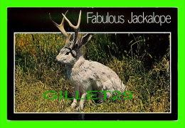COMICS - HUMOUR - FABULOUS JACKALOPE - WYOMING BOOK & CARD - - Bandes Dessinées