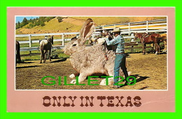 COMICS - HUMOUR - BIG RABBIT, ONLY IN TEXAS - SADDLING UP BIG JACK - A-W DISTRIBUTOR & IMPORTERS, 1986 - - Bandes Dessinées