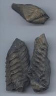 Lot De 2 Trilobites Bretons - Fossiles