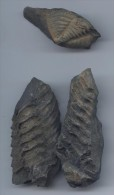 Lot De 2 Trilobites Bretons - Fossili