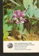 Old Collectibles Soviet Calendar Latvia Riga LSSR USSR 1984 Protected Plant Flora Flower - Lathyrus Maritimus Bigel - Calendars