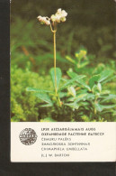 Soviet Latvia Riga LSSR USSR 1984 Protected Plant Flora Flower Chimaphila Umbellata (L.) W. Barton Collectibles Calendar - Calendars