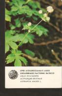 NO1/2. Soviet Small Collectibles Calendar Latvia Riga LSSR USSR 1984 Protected Plant Flora Flower - Astrantia Major L. - Calendars