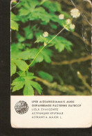 NO2/2. Old Soviet Latvia Riga LSSR USSR 1984 Protected Plant Flora Flower Astrantia Major L. Small Collectibles Calendar - Calendars