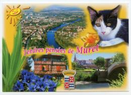 Muret, 31, Vue Aérienne, Blason, Soleil, Chat Ou Chatte - Muret