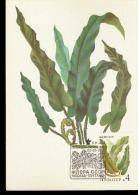 CCCP VEGETAZIONE 1987 - Vegetazione