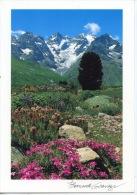 Le Jardin Alpin Du Lautaret - Massif De La MeijeBernard Grange N°5366 - France