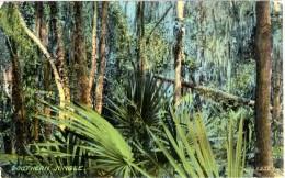 Southern Jungle - Etats-Unis