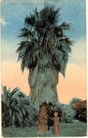 Palms - New Orleans - Etats-Unis