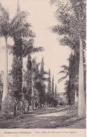 CPA Missions D'Afrique - Une Allée De Palmiers Et De Cypres (8691) - Missions