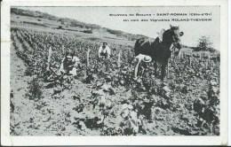 ENVIRONS DE BEAUNE - SAINT ROMAIN - Un Coin Des Vignobles ROLAND THEVENIN ( Petite Fente Sur Le Côté Voir Scan) - Beaune
