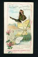 Chocolaterie Aiguebelle - Papillons - Lépidoptères - L'Illustre - La Souffrée - La Virginale  - 10 090 - Aiguebelle