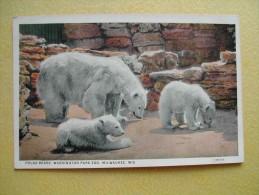 Le Parc Zoologique. Les Ours Polaires. - Milwaukee