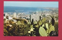 ALGER      //  Panorama - Algiers