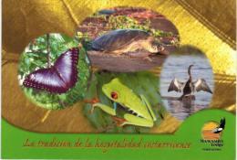 Amérique - Costa Rica - Mawamba Lodge  Tortuguero - Papillon - Tortue - Grenouille - Costa Rica