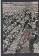 K717 - Vendanges En Bourgogne - Postée De DIJON - (21 - Cote D'OR) - Dijon