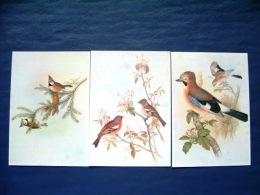 3 Postcards On Birds - Painted By John Gould - Belgium - Birds