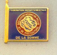 Rare pin�sF�d�ration D�partementalede la Somme p�che