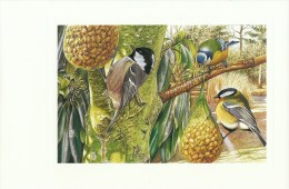 465.MESANGE NOIRE-MESANGE BLEUE-MESANGE CHARBONNIERE - Pájaros