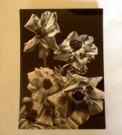 Fiore Non Viaggiata Vintage K - Fiori, Piante & Alberi