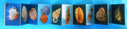 MALACOLOGICAL MUSEUM - SEA SHELLS Old Set Of 11. Photos - Sea Shell Coquillage Seashell Seashells Coquillages Conchiglia - Reproductions
